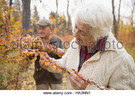 Senior woman examinant les feuilles d'automne sur branch in park Banque D'Images
