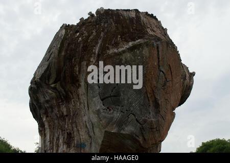 Arbres sculptés stump avec tronçonneuse coupe à Bury St Edmunds Banque D'Images