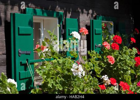 Vintage windows avec des fleurs sur le vieux bois house dans le sud de la Styrie, Autriche, Europe Banque D'Images