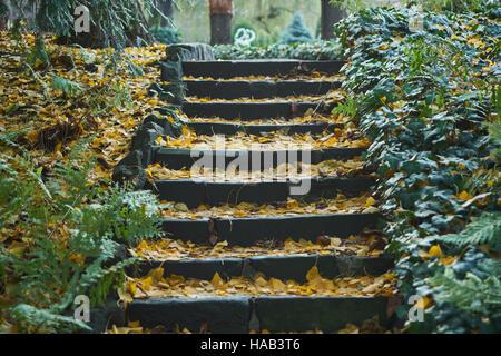 Escalier de pierre recouvert de feuilles tombées bordée par Ivy Banque D'Images