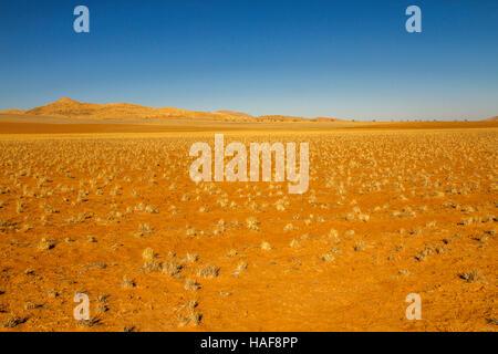 Quelques touffes d'herbe d'or, sable orange vif, multi-couleur des dunes et un ciel bleu vif composent le désert Banque D'Images