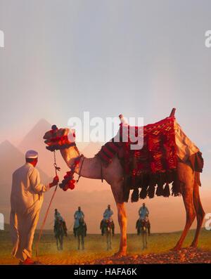 Les chameaux et pyramides à l'aube, Giza, Le Caire, Egypte Banque D'Images
