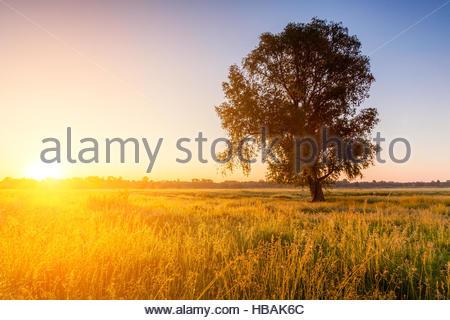 Lonely tree sur le domaine à l'aube Banque D'Images
