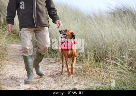 Homme marchant le chien sur le sable des dunes, Constantine Bay, Cornwall, UK Banque D'Images