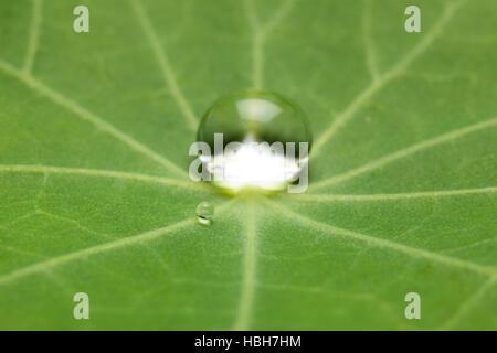 Effet Lotus avec goutte d'eau sur feuille de lotus Banque D'Images