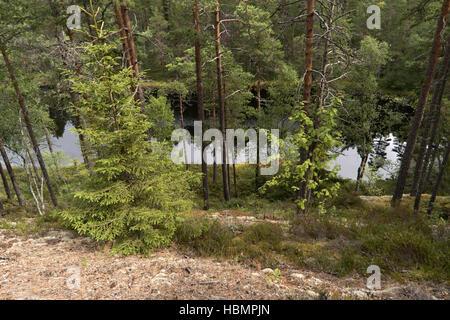 Paysage au lac Vättern en Suède