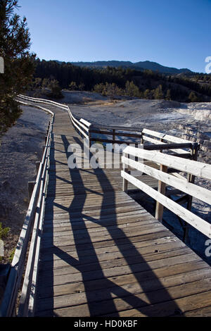 Promenade à Mammoth Hot Springs, Parc National de Yellowstone, Wyoming, USA ; Banque D'Images