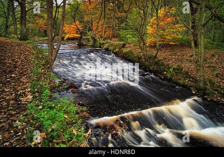 UK,South Yorkshire,Sheffield Rivelin Valley,Rivière,,Rivelin Roscoe Weir en automne Banque D'Images