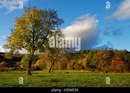 UK,Derbyshire Peak District,dos,Tor et Grand Ridge de la vallée de l'espoir à l'automne Banque D'Images