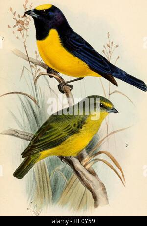 Catalogue des oiseaux dans le British Museum (1882) Banque D'Images