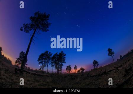 Paysage de nuit avec les voies d'étoiles dans la forêt avec de beaux grands arbres. Belle piscine extérieure, papier Banque D'Images