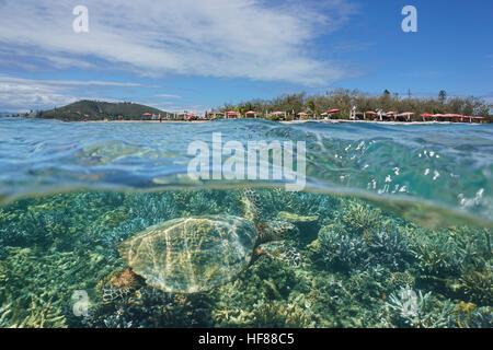 Une tortue imbriquée tortue de mer et sous l'îlot Canard au-dessus de l'eau divisée par flottaison, Nouvelle-Calédonie, Banque D'Images