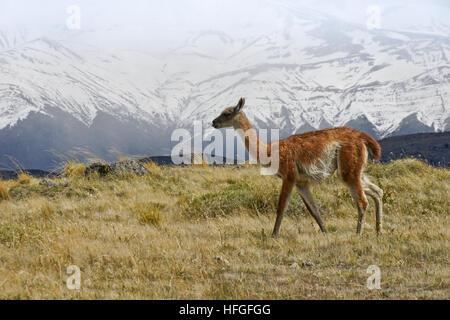 Cobourg dans NP Torres del Paine, Patagonie, Chili