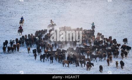 Hohhot, Chine, région autonome de Mongolie intérieure. 6 janvier, 2017. Les éleveurs de chevaux dans lasso Xilinhot, Chine du nord, région autonome de Mongolie intérieure, le 6 janvier 2017. © Lian Zhen/Xinhua/Alamy Live News