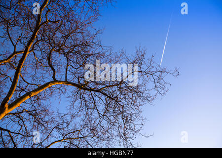 Branche d'arbre sur fond de ciel bleu. Banque D'Images