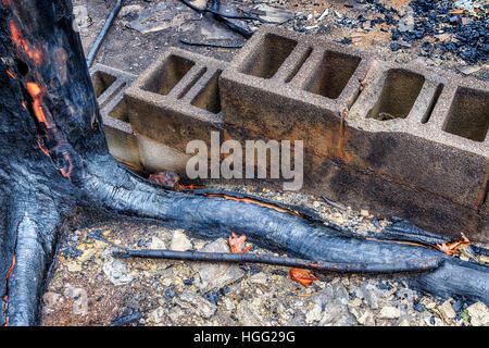Un tronc d'arbre et les racines noircies par un incendie de forêt qui ont ravagé Gatlinburg, TN, USA en décembre Banque D'Images