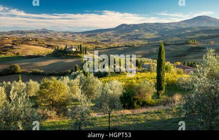 La fin de l'après-midi du soleil sur le Belvédère et la campagne du Val d'Orcia, près de San Quirico, Toscane, Italie Banque D'Images