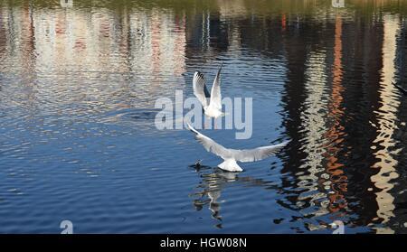Deux mouettes volent au-dessus d'une rivière. Banque D'Images