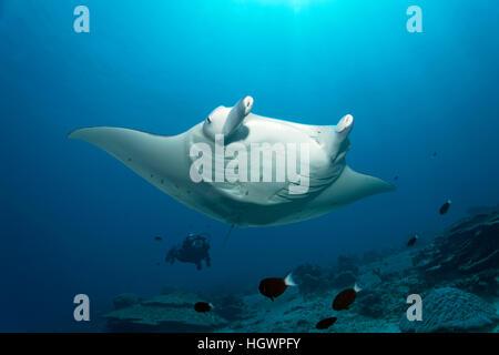 Manta (Manta birostris), natation sur coral reef, plongeur observant, Lhaviyani Atoll, Maldives Banque D'Images