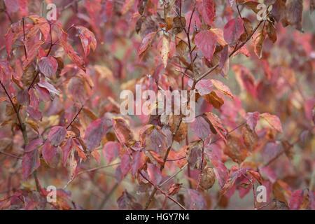 Nature de l'automne, on peut voir toute une gamme de couleurs, est le moment idéal pour de longues promenades et Banque D'Images