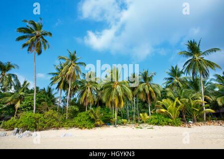 Plage tropicale et de cocotiers à Koh Samui, Thaïlande Banque D'Images