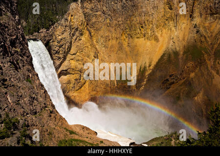 Rainbow au pied de Lower Falls de Uncle Tom's Trail dans le Grand Canyon de la Yellowstone River ; le parc national Banque D'Images