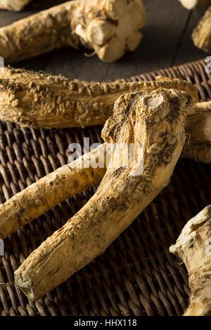 Brown biologiques crus racine de raifort et prête pour la cuisson Banque D'Images