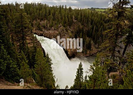 WY02147-00...WYOMING - Upper Falls dans le Grand Canyon de la Yellowstone River dans le Parc National de Yellowstone. Banque D'Images
