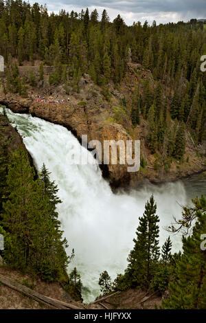 WY02150-00...WYOMING - Upper Falls dans le Grand Canyon de la Yellowstone River dans le Parc National de Yellowstone. Banque D'Images