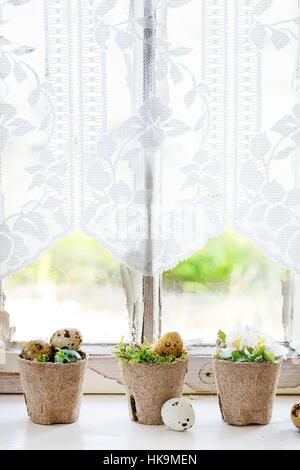 Décoration d'oeufs de caille de Pâques colorés avec des fleurs de cerisier au printemps et de la mousse dans des petits pots de jardin blanc sur rebord de fenêtre avec lumière du jour et le rideau