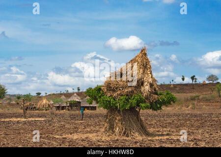 L'ensemble de la paille sur les terres agricoles, l'Éthiopie, Konso Banque D'Images