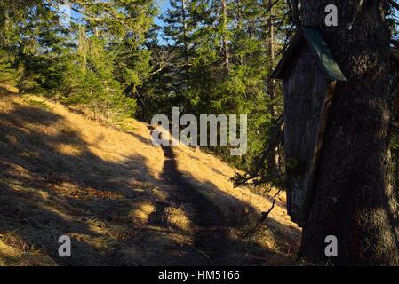 Plaque commémorative sur un sentier de randonnée et de l'arbre avec de l'après-midi soleil, Bavière, Allemagne Banque D'Images