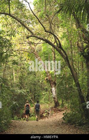 Les touristes sur piste forestière, forêt tropicale de plaine, Parc National Manuel Antonio, Costa Rica. Banque D'Images