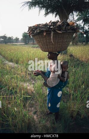 Femme avec un enfant attaché sur le dos portant un panier sur sa tête dans un champ de riz, au Sénégal. Banque D'Images