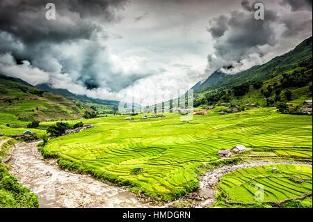 Les rizières en terrasses près du village Ta Van dans la vallée de la rivière Muong Hoa, District de Sa Pa, province Banque D'Images