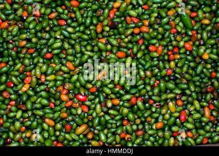 Poivrons rouges et verts sur un marché Banque D'Images