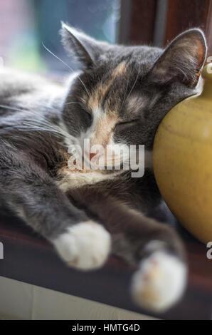 Sieste sur une fenêtre de chat sur un dimanche après-midi paresseux Banque D'Images