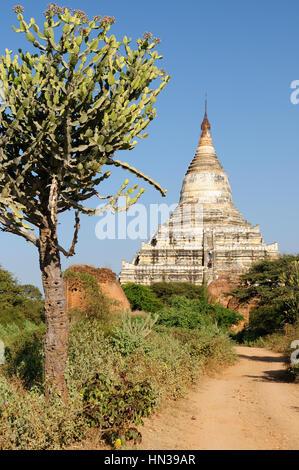 Le Myanmar, Bagan,Shwesandaw Paya Temple, le plus important temple de Bagan Banque D'Images