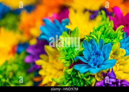 Teints de couleur plusieurs bouquets de marguerites