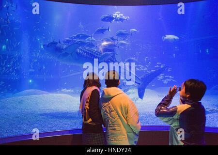 Aquarium d'Osaka Kaiyukan,les visiteurs à l'énorme requin-baleine dans la baie,réservoir massif,Osaka, Japon, Asie Banque D'Images