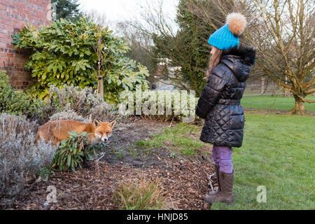 Fox urbain à côté du jeune enfant dans le parc, au cours de la journée. Animal boiteux faim cherche la nourriture Banque D'Images