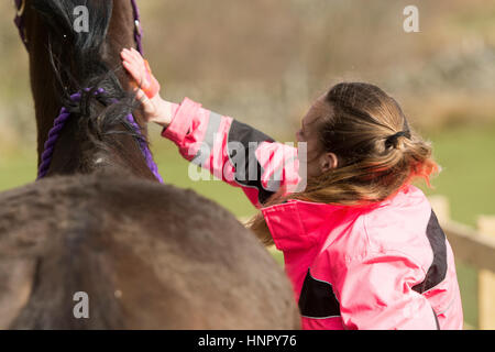 Woman grooming son cheval. Le Yorkshire, UK. Banque D'Images