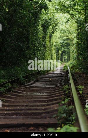 Tunnel naturel de l'amour qui sortent de l'arbres Banque D'Images
