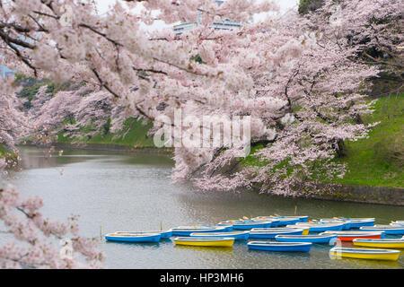 Barques dans le fossé du Palais Impérial à Tokyo, Japon Banque D'Images