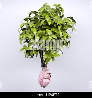 Coeur de l'usine et que les racines d'organes, 3d illustration Banque D'Images