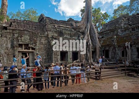 Les touristes de prendre des photos de l'une de l'arbre (Tetrameles nudiflora) au Ta Prohm temple où les racines Banque D'Images