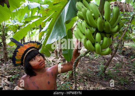Plantation de banane au Brésil. Les bananes sont un produit d'exportation principal. Banque D'Images
