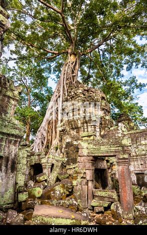 Ta Prohm temple à Angkor au Cambodge Banque D'Images