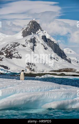Un adulte Adelie penguin (Pygoscelis adeliae) debout sur un iceberg avec une haute montagne couverte de glacier Banque D'Images