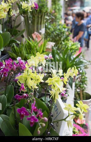 Marché aux Fleurs, Mongkok, Kowloon, Hong Kong Banque D'Images